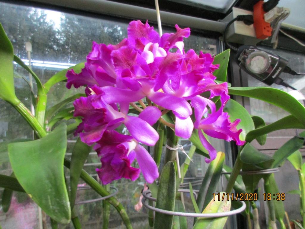 Lc. Tristar Bouquet 'Hawaii' (Anne-Marie Blancquaert)